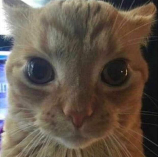 Рыжий кот в упор посмотрел в камеру и оказался в мемах. На пикчах хвостатый — гуру слежки