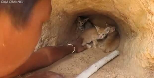 Смотрите, как дикая кошка сражается с питоном, чтобы защитить своих котят