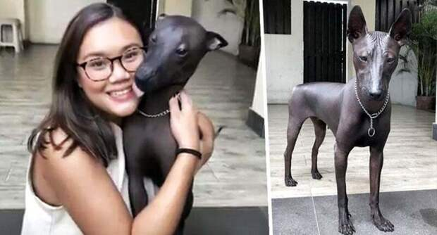 Пёсель или статуя? Лысая собака Пайпер — вылитый памятник Пайпер, в мире, внешность, забавно, иллюзия, памятник, собака, статуя