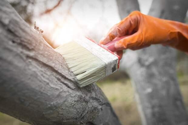 Четыре причины, приводящие к вымерзанию деревьев