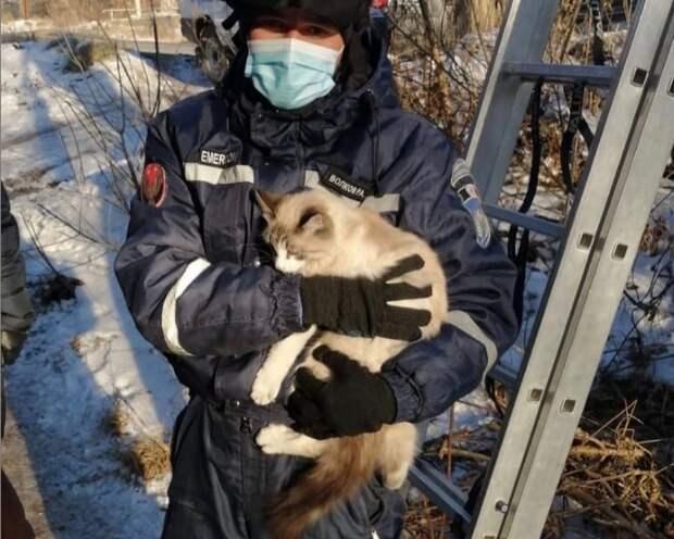 Кошку вернули хозяйке в Сарапуле спасатели Удмуртии