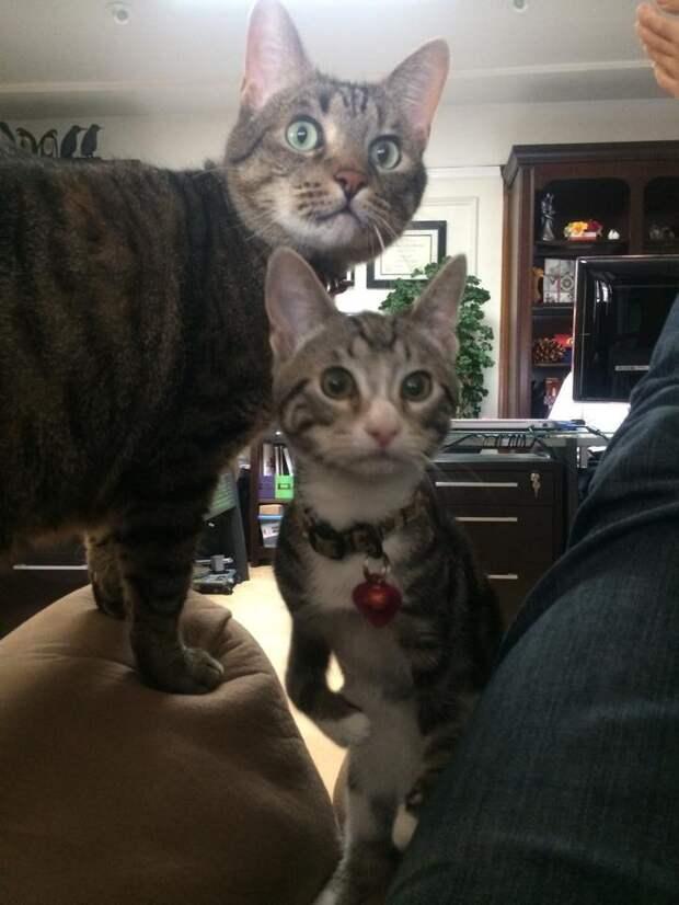 Хозяева принесли котёнка на эвтаназию… Но маленькую Кенгурушу у них отобрали!