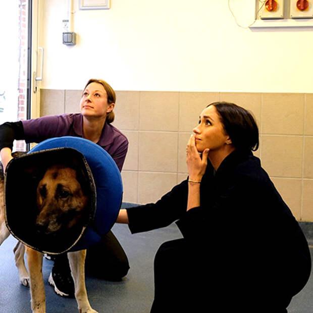 Меган Маркл посетила приют для животных Mayhew