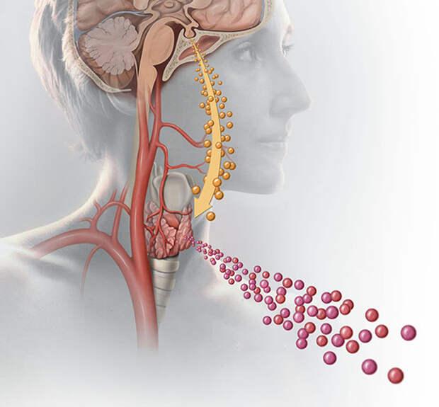Продуктов, которые жаждет ваша щитовидка