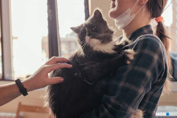 Пушистые и одинокие: в Новосибирске прошла выставка-раздача бездомных котов