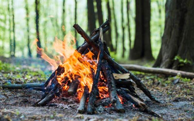 Использовать какие попало дрова точно не стоит. /Фото: ya.ru.
