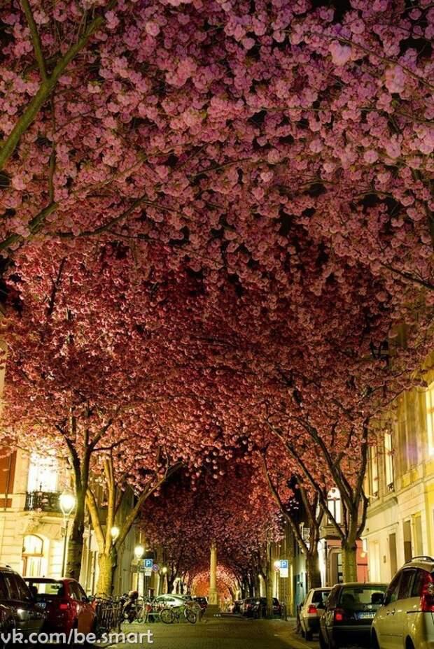 10 самых волшебных улиц мира, украшенных деревьями и цветами