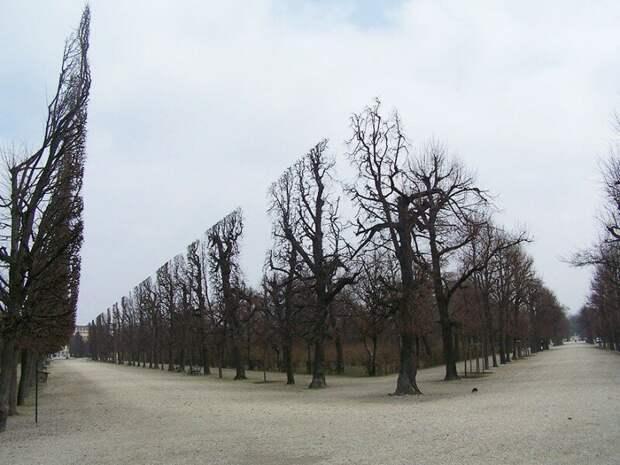 Деревья в парке Шёнбрунн