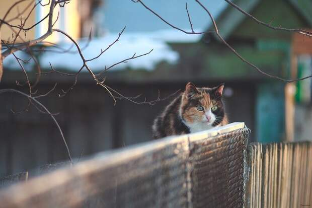 Красивые ребята из Шадринска, Курганская область город, домашние животные, забор, кот, кошка, село, улица, эстетика