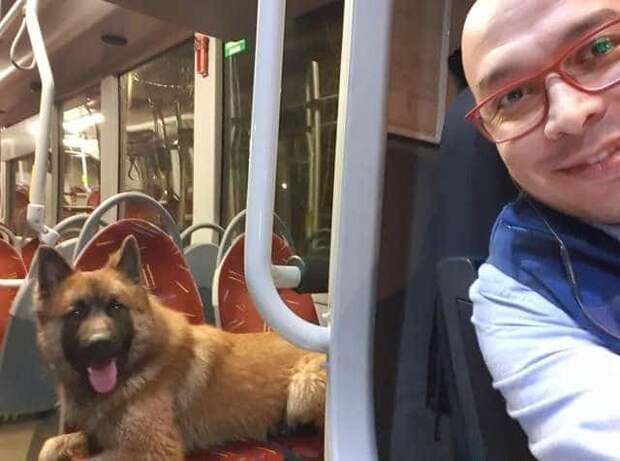 Водитель автобуса заметил в темноте огромного пса. Тот блуждал по обочине дороги…