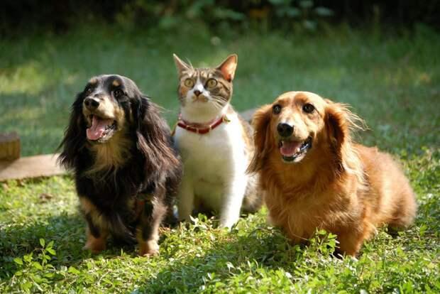 Хозяин найдется: обязательная маркировка животных может начаться с 2022 года