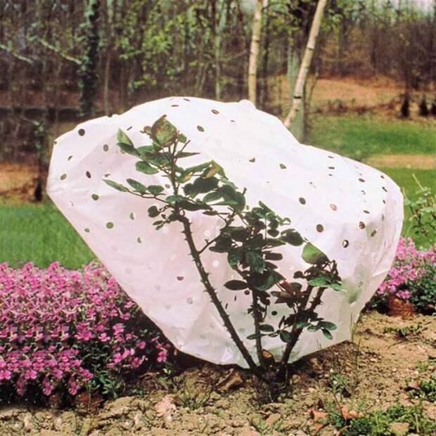 Старая простыня вполне может спасти растения от гибели в непогоду. /Фото: willemsefrance.fr