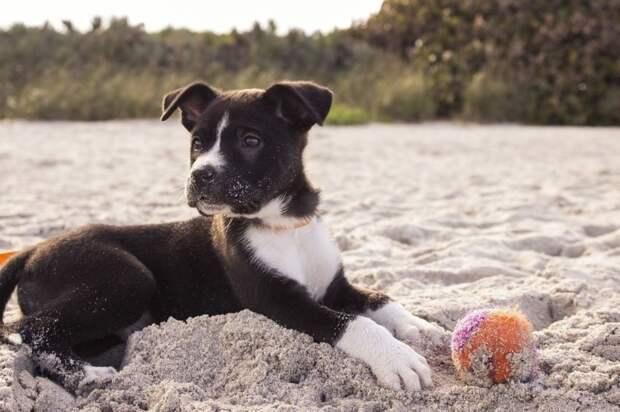 Плавать на бревнах и ходить с животными на пляж запрещено в России с 1 января