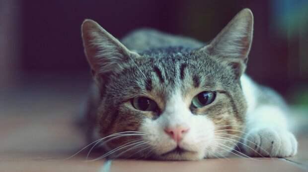 Он был не просто питомцем, а настоящим членом семьи Любовь, жизнь, истории, кот, питомец, смерть