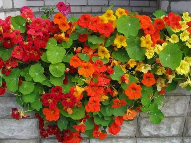 10 лучших ампельных цветов и растений для сада