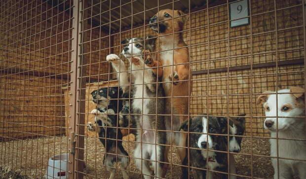 Прокурор Оренбурга потребовал через суд создать приют для животных