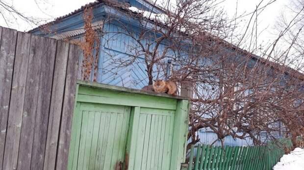 Надеемся, что забор покосился не из-за кота город, домашние животные, забор, кот, кошка, село, улица, эстетика