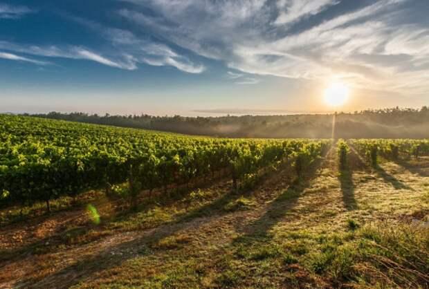 Завод марочных вин «Коктебель» будет продан на аукционе