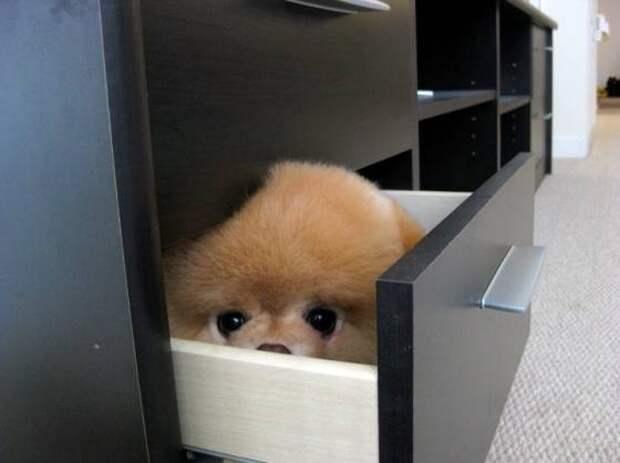 Маленький щенок, который прячется от грозы.