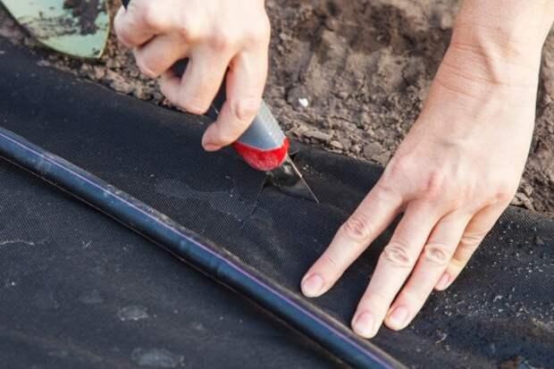 Посадка рассады под черное агроволокно
