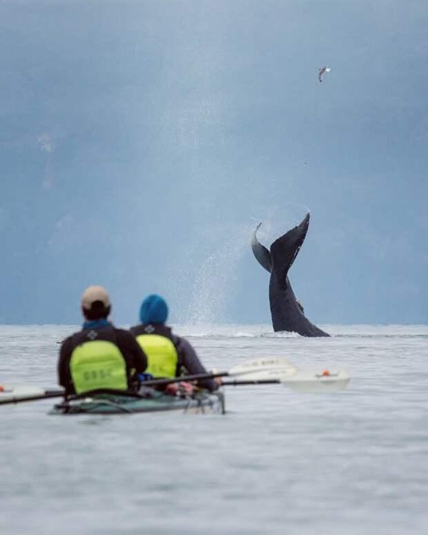 """М.Сейгал  """"...Мы провели следующий час, наблюдая за этими величественными существами, когда вдруг поняли, что киты полностью окружили нас... Это был абсолютно волшебный вечер""""."""