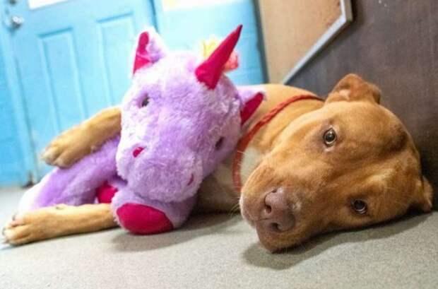 Сиреневый единорог или собака с мечтой