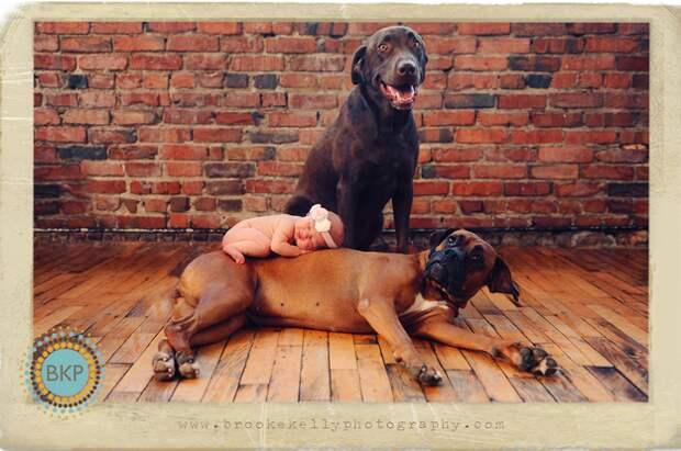 младенцы и собаки первая фотосессия (15)