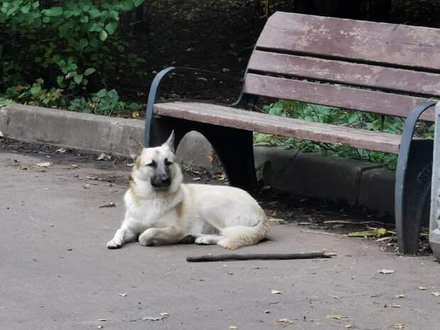 У станции метро «Щукинская» потерялась собака