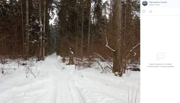 Фото дня: утро в Алёшкинском лесу