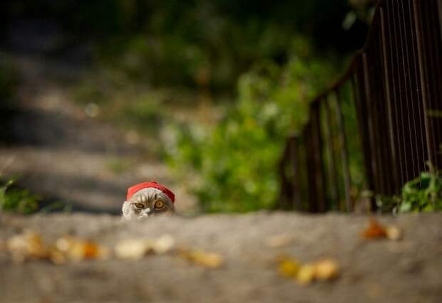 Веселая подборка фото приколов