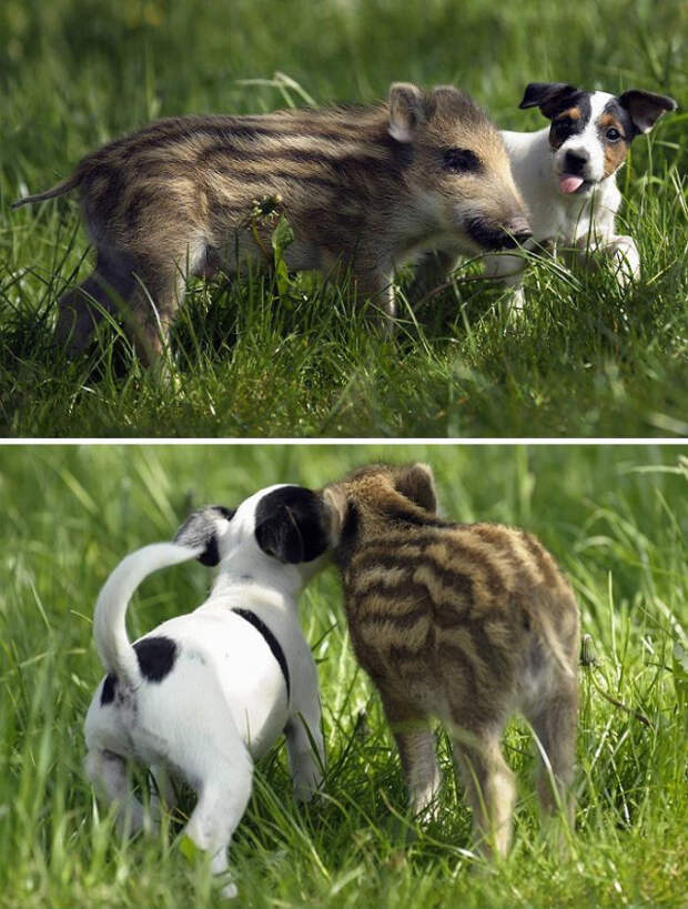 22 примера дружбы между животными, которые растопят ваше сердце