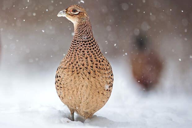 Обледеневшие птицы падают на землю из-за аномальных морозов в России