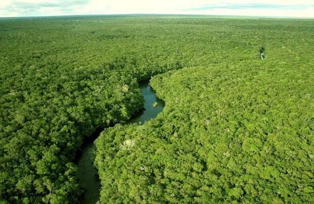 Amazonas01 Большое фотопутешествие по лесам Амазонки