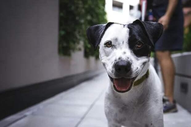 Будьте осторожны: ветеринары спасли собаку, которая съела мишуру