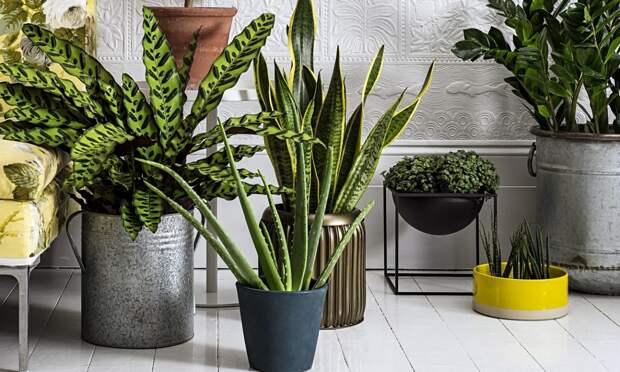 Основные вопросы и ответы по комнатным растениям