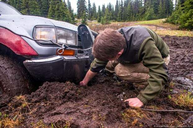 Как в Канаде грибы собирают