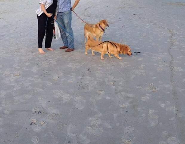 Смешные панорамные кадры с собаками