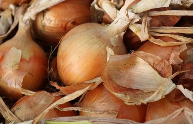 Луковая шелуха незаменима для огородников / Фото: pixabay.com