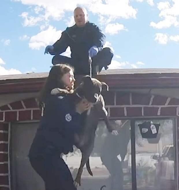 «Тише-тише, питбуль на крыше!»: пёсика занесло на самую верхушку дома