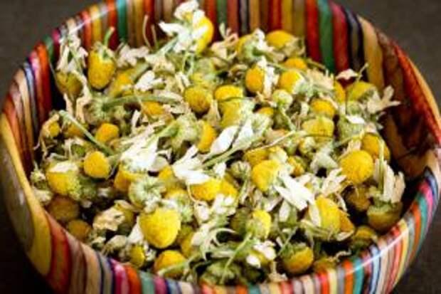 Цветки ромашки для приготовления отвара