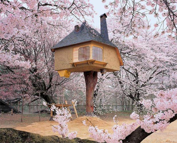 Чайный домик на дереве Тетсу (Tetsu) в городе Хокуто в Японии.