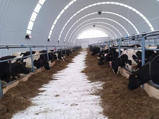 В Можгинском районе Удмуртии открыли новую животноводческую ферму