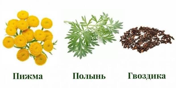 Рецепты русской тройчатки от доктора Иванченко.