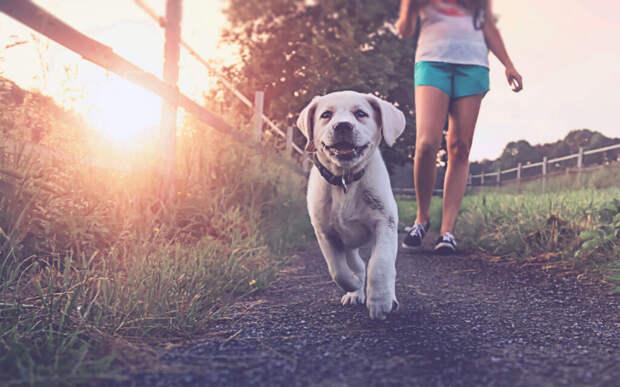 7 лучших Вордпресс шаблонов для сайта кинологического центра и дрессировки собак