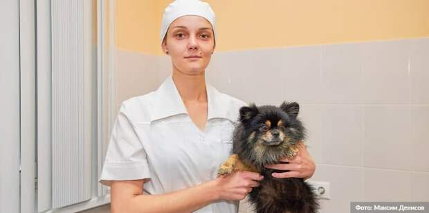 Собянин одобрил создание в Москве ветеринарной автоматизированной системы