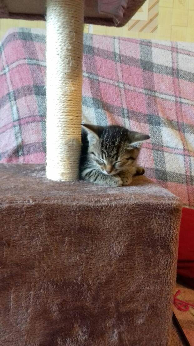 Котята 3 дня кричали в прошивке над потолком...
