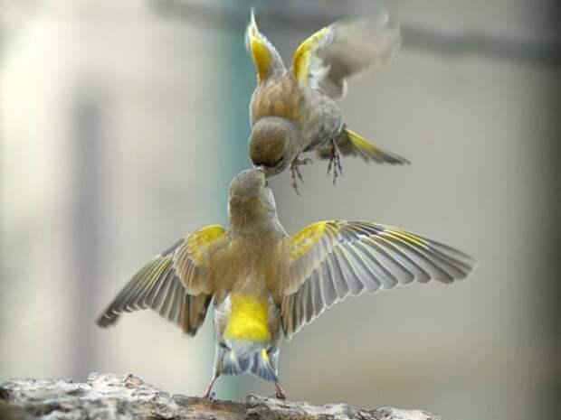 Очаровательные создания с ярким оперением и удивительным голосом.