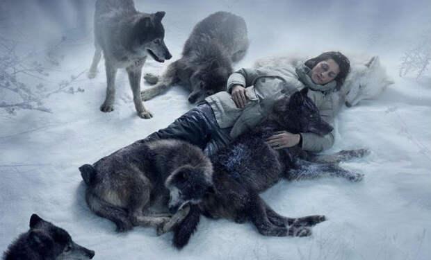 Волк вышел из леса и спас человека из ледяного плена