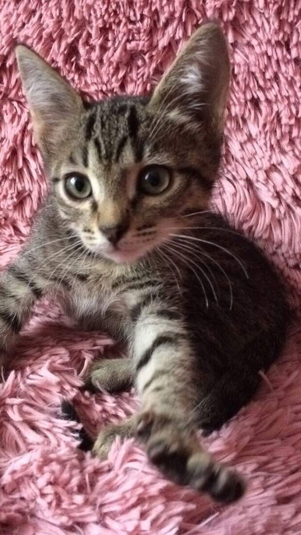 Переживала, как мой кот воспримет найденного котенка. Но через неделю малыш начал вводить свои правила