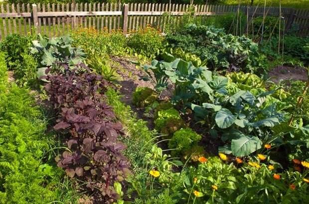 Удачное соседство – хороший урожай